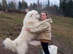 The Great Pyrenees on a farm
