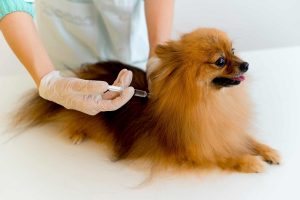 stem cell therapy for canines
