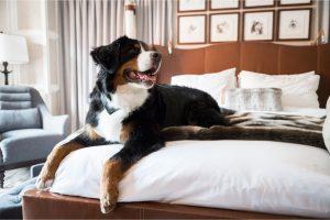 best pet hotel