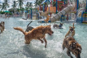 Palm Beach Dog Park